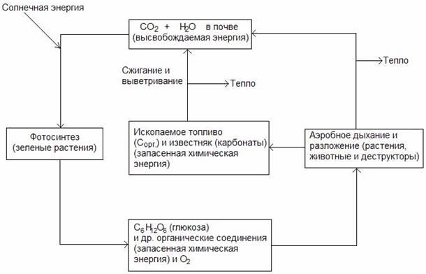 I. Круговорот углерода